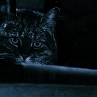 La Sombra del Gato (1961)